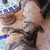 Rt 126, NM mud this. after the sliding adventure!