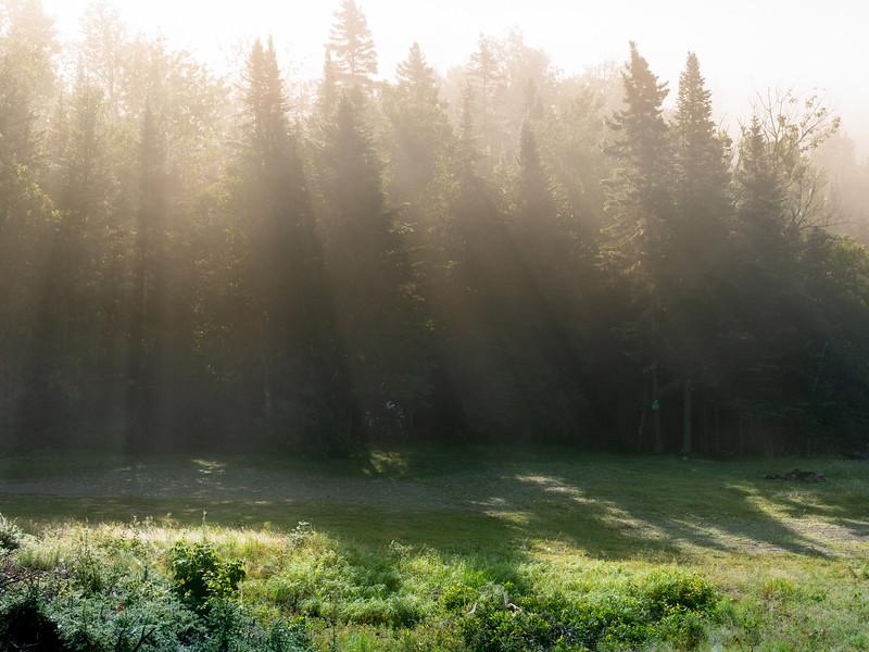 still misty in the woods.