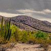 Border Wall at Organ Pipe Cactus National Monument. The monument shares 31 miles of international border with Mexico.