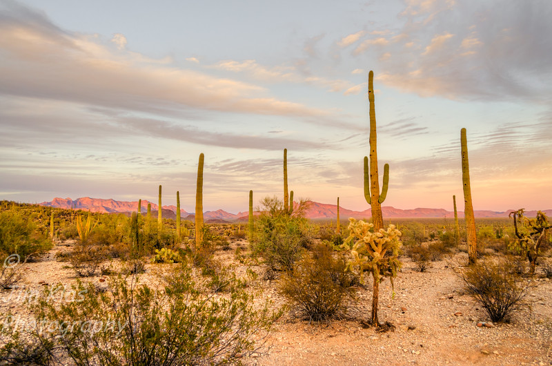 Sunset. Organ Pipe Cactus National Monument - The Sonoran Desert