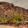 Organ Pipe Cactus National Monument,
