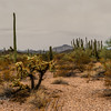 //www.loveyourrv.com/ajo-mountain-drive-organ-pipe-cactus-park/