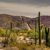 This is the Border Wall at Organ Pipe Cactus National Monument, A lot of border patrol agents everywhere.