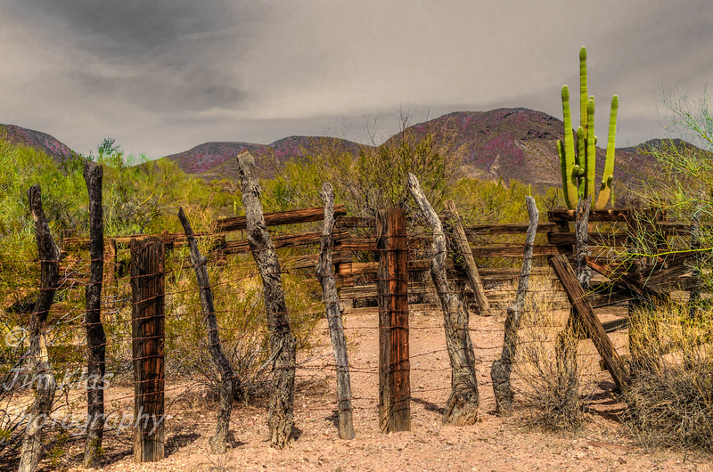 Bates Well Ranch @ Organ Pipe Cactus National Monument,