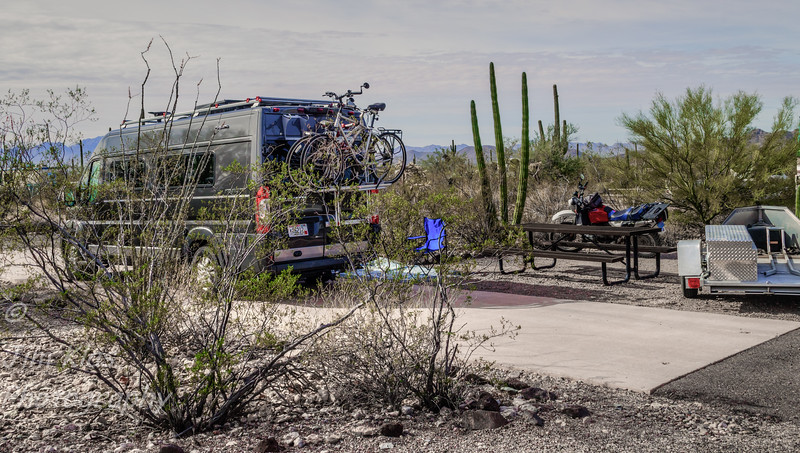 This was our campsite at Organ Pipe Cactus National Monument, Cost for senior pass was $8 with a 14 day limit. This place is on my list to return to