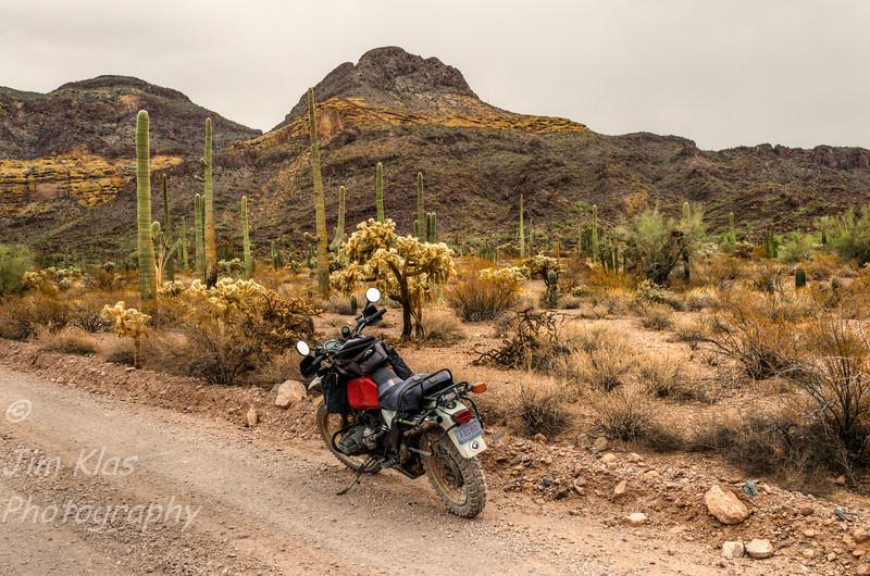 Organ Pipe Cactus National Monument,