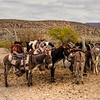 A popular choice to take a horse or burro into town. Horses run $8 per person round trip, and burros $5. A local guide will accompany you, show you the town, and stay close until you are ready to return. Visitors may also ride in a pickup truck for $5 per head. Gratuities for good service are always appreciated.