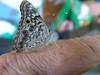 Butterfly passenger