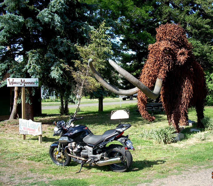 2 Wooly Mammoth's!