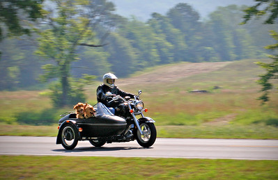 A Ride in the Country with Roscoe and Bailey