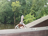 Pooey relaxing on the Smith Mill Bridge.
