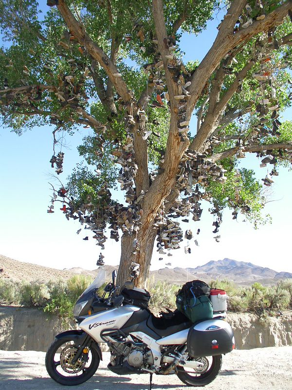 The shoe tree on 50 NV.