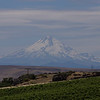Mt Hood seen from the Mary Hill Winery.