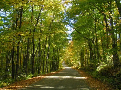 loon lake rd, oct 5, 2004a