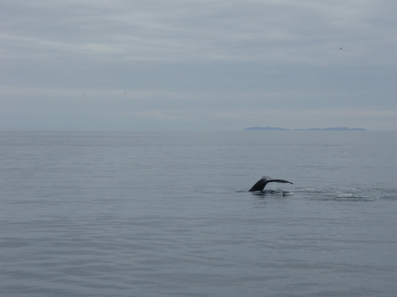 We saw a bunch of humpbacks