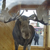 I saw this moose in a box..took a pic and got this cool effect.