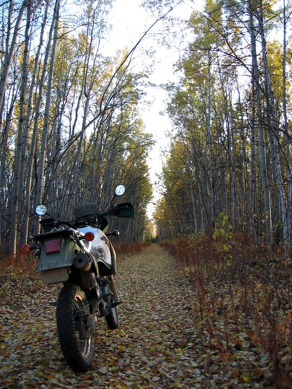 On the Nenana River Trail on Clear AFS
