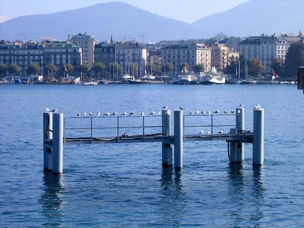 Exclusive bird hotel, Lac Leman Geneva Switzerland