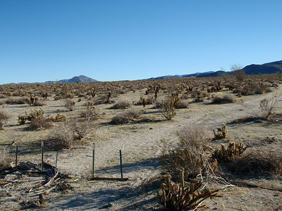 Anza Borrego New Year