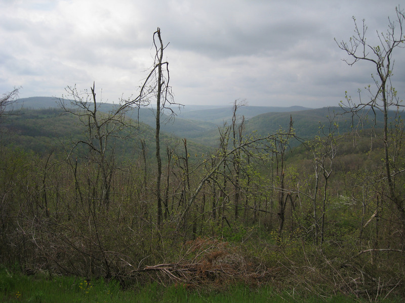 2008's winter ice storm denuded miles and miles of Arkansas forest.