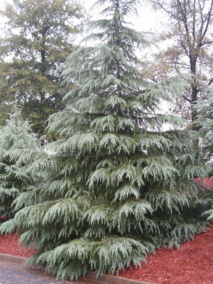 Looks like winter in OCT.