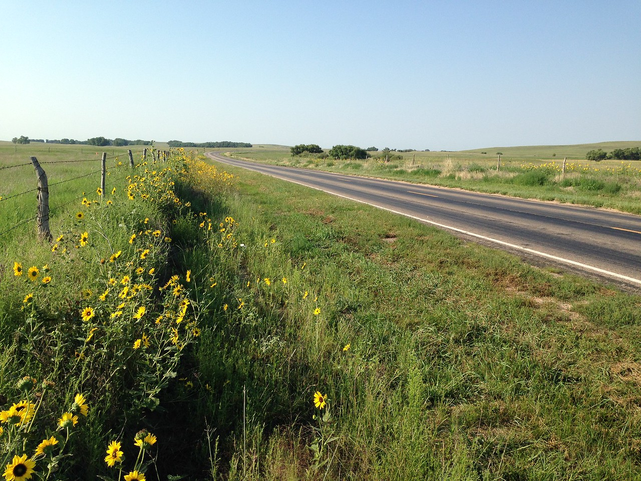 Heading across NE to Colorado. While most of NE is flat and green with corn, the western part of the state is unexpectedly lovely. These sunflowers are everywhere, and the roads get curvy and even a little hilly. It's very pretty and of course, there's no traffic.