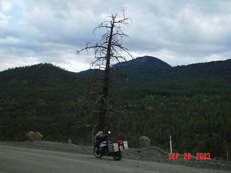 23 Knarly old tree