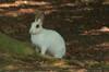Vrij lopend konijn