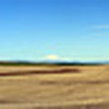Along SR 206 towards Condon are wide views of the wind farms and volcanos.