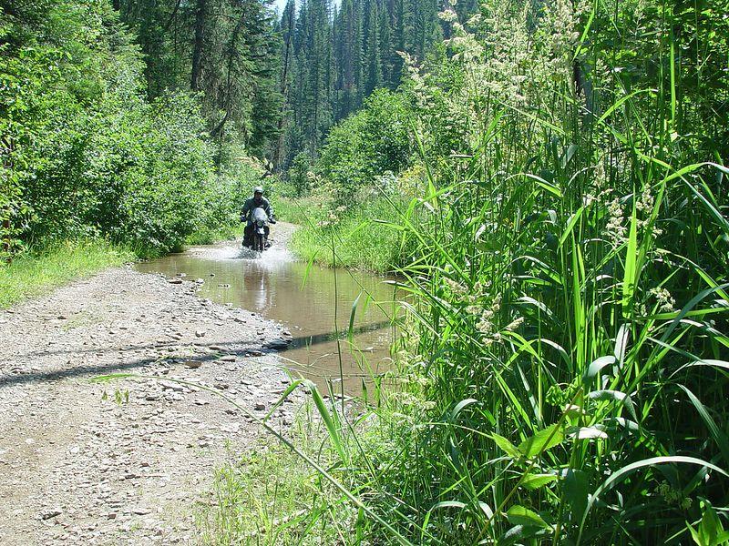 Mr. Cob crossing the creek.