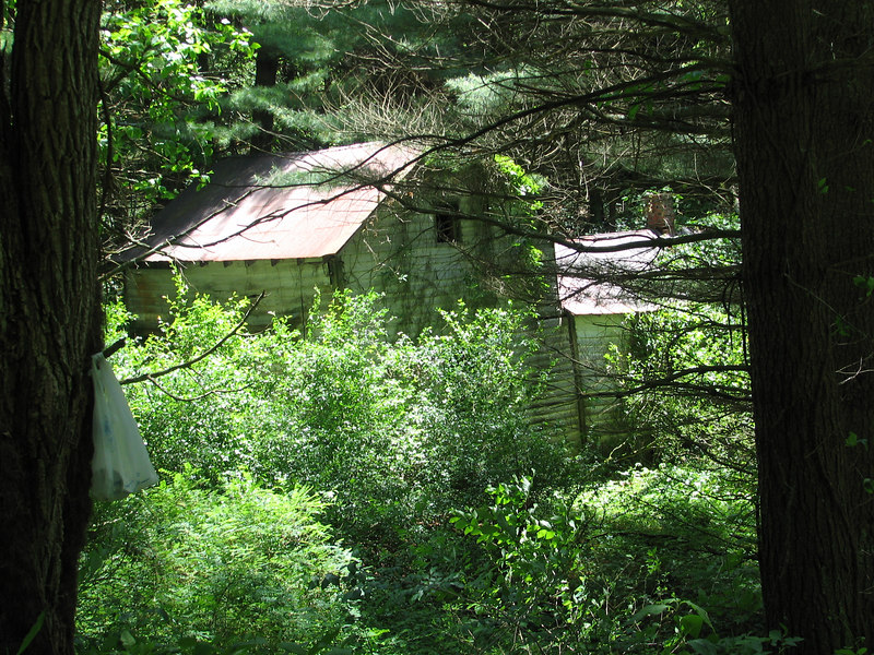 An abandoned cabin in the woods near the exit of our off-road foray.