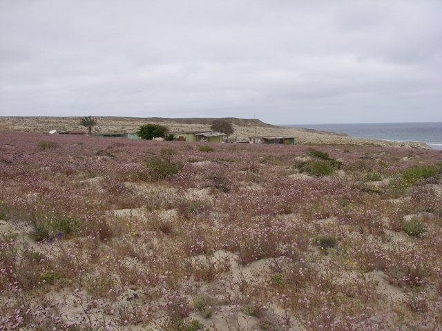 Desert was in bloom, it was miles of wildflowers all around us.  Nice soft, fine sand.