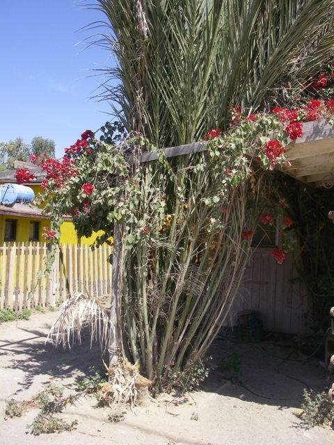 Fronts of building covered with lush flowers, in a very arid desert landscape.