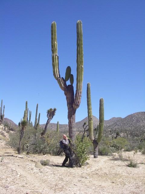 Damn that's a big Seguaro.