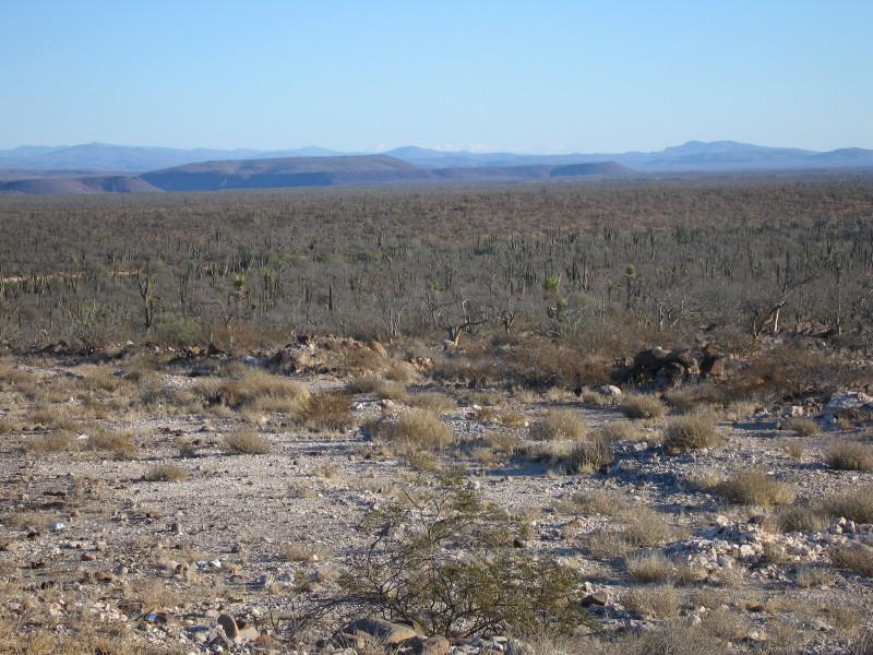 Cactus forest.