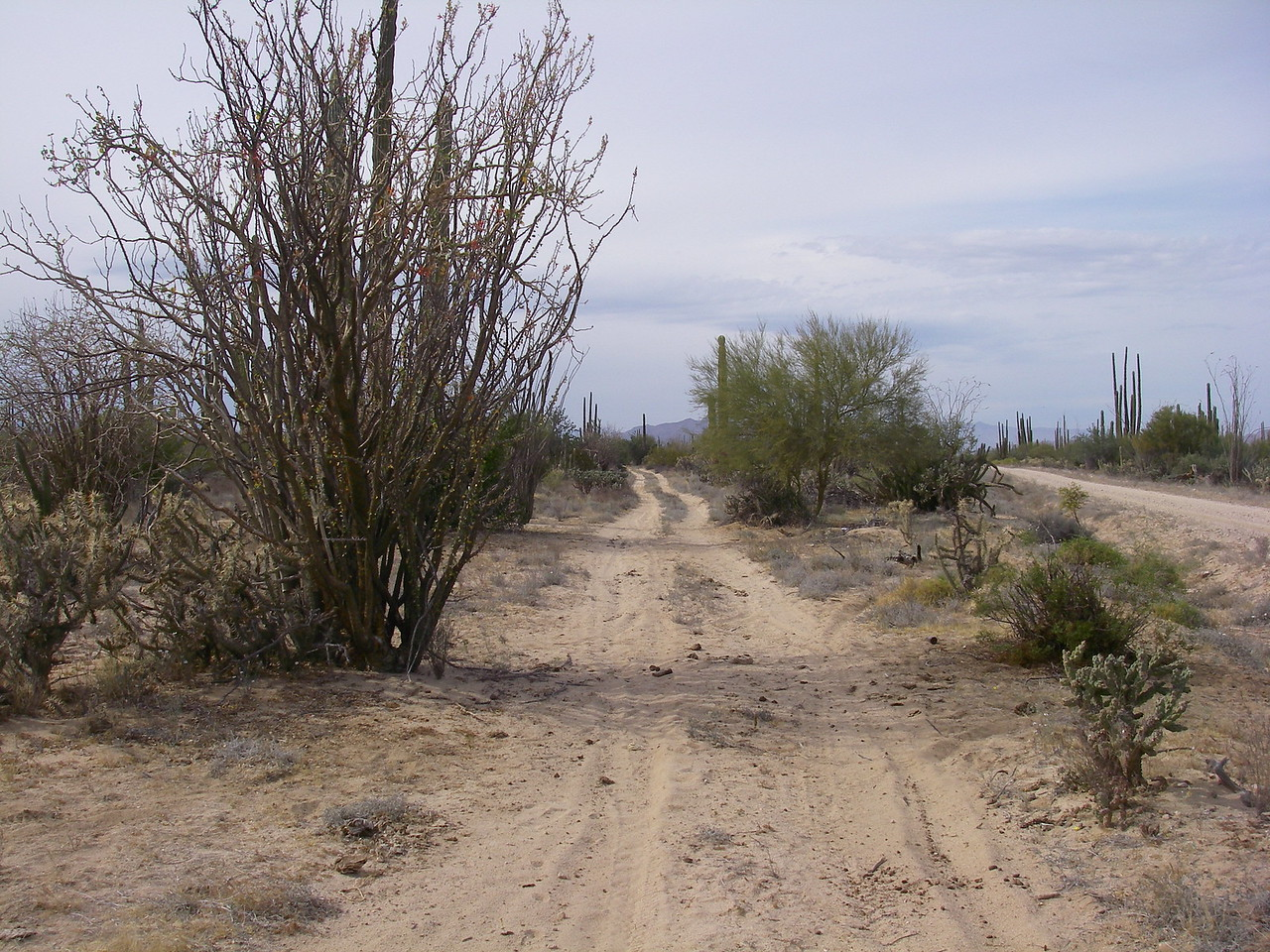 """Entrance to the South end of the """"Green Door Trail"""".  The first few kms were small whoops non-stop, real sandy, real fun!"""