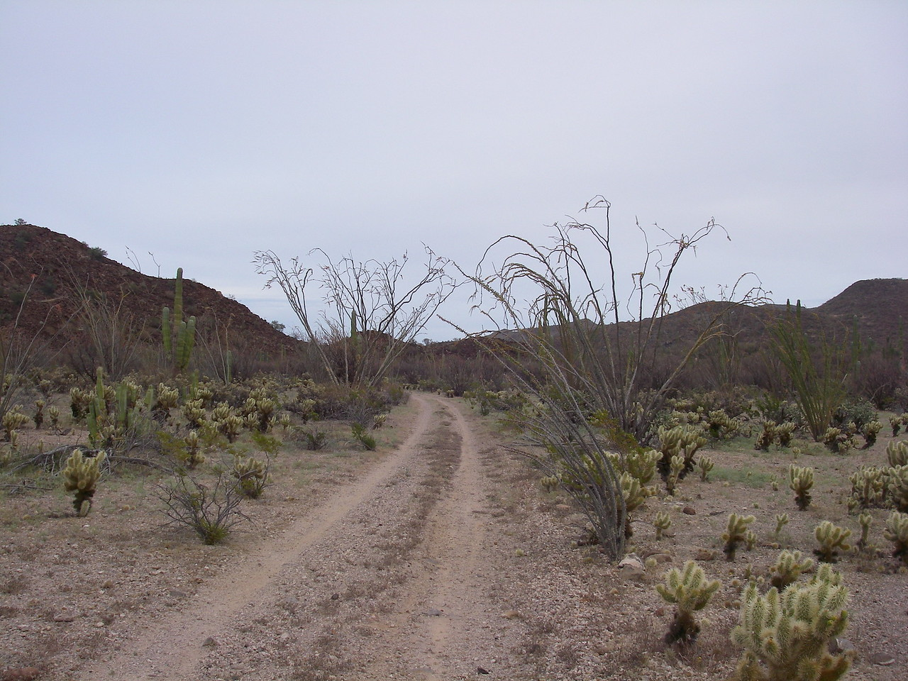 We come out of this little arroyo and up into this area that looks like someone with a green-thumb had planted a beautiful cactus garden.