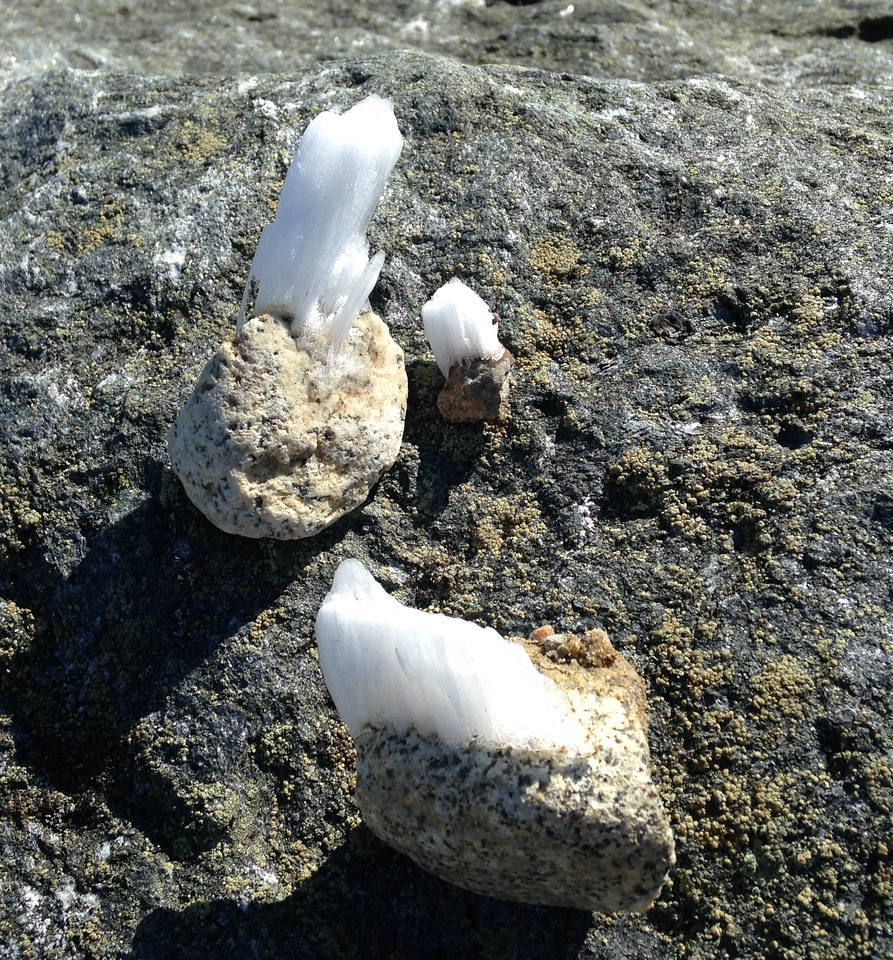 Even pebbles grow rime. In the clear sun, it looks like the rocks are growing crystals. (Photo: Lisa)
