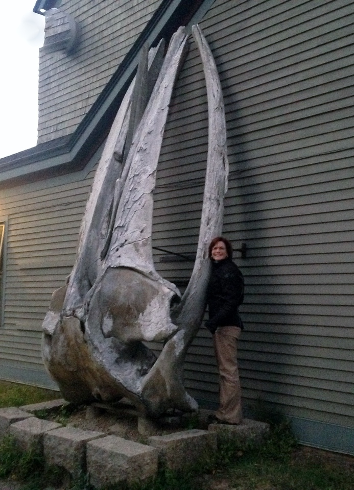 Meanwhile, Lisa was conferencing and exploring local institutions of higher learning. In Bar Harbor, that would be the College of the Atlantic, a small school for unfocused adolescents with trust funds. The campus prominently features this skull, from an apparently unknown species of whale.