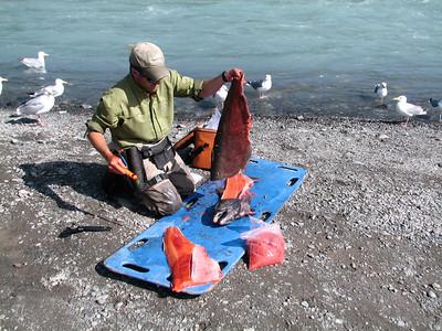 King Salmon !!