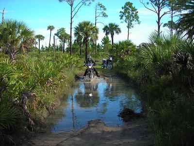 Big Cypress, Florida,  Aug 2006
