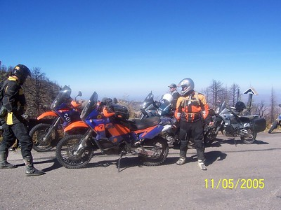 Big Dogs at Mt Lemmon