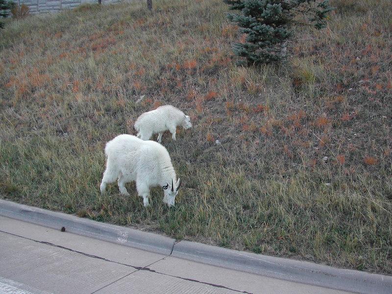 locals at Mt Rushmore
