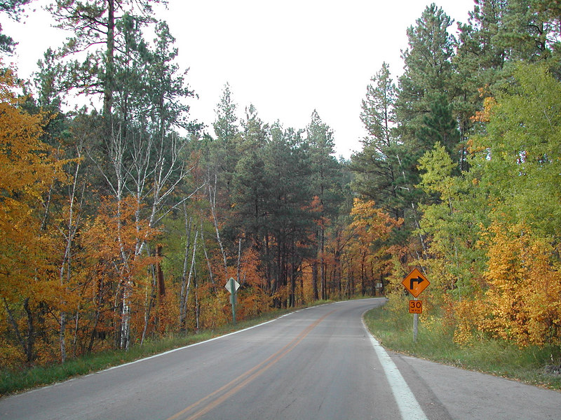 Iron Mountain rd is a great ride on a Fall weekday,,no traffic, just the road to yourself most of the time..