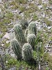 Cactus fascinate me, kinda like rocks do.