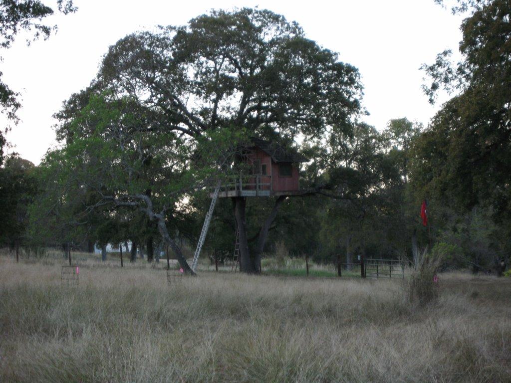 The tree house.