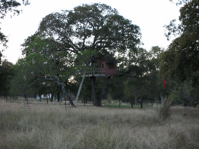 The tree house.