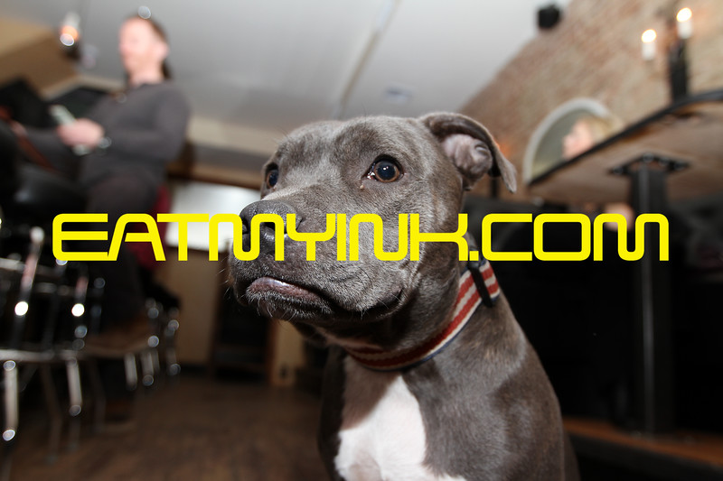 Dog8141Brooklyn2011