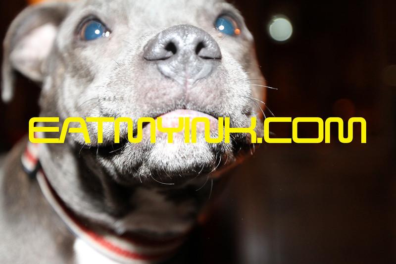 Dog8139Brooklyn2011