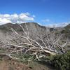 Higher desert terrain (near 6k feet) brings in more vegetation.  Not all of it survives the harsh climate.